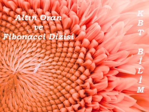 fibonacci_sunflower