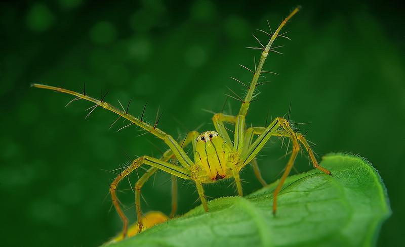 örümcek3