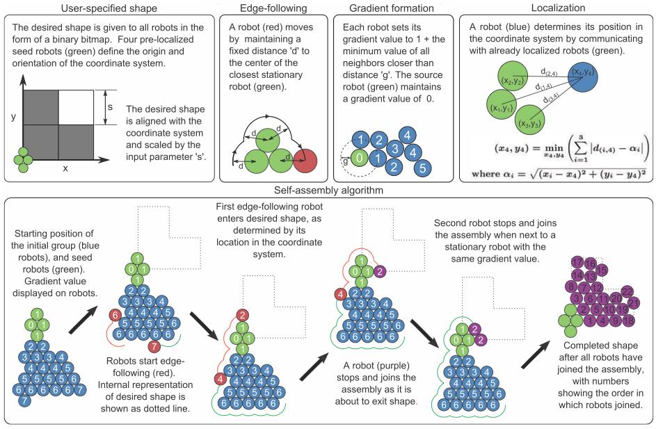Kolektif bir şekilde kendi kendine organize olan robot sürüsünün algoritması. Image: Harvard University/Science