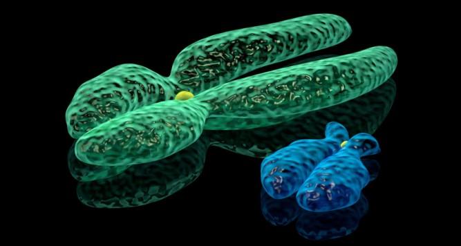 ykromozom