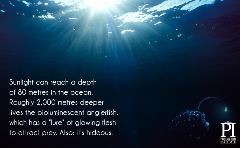 Gün ışığı okyanusta 80 metrelik bir derinliğe ulaşabilir. Kabaca 2 bin metre derinlikte biyolüminesans fenersi balığı yaşar. Parlayan etini yem olarak kullanarak avını kendisine çeker.  Source: Perimeter Institute