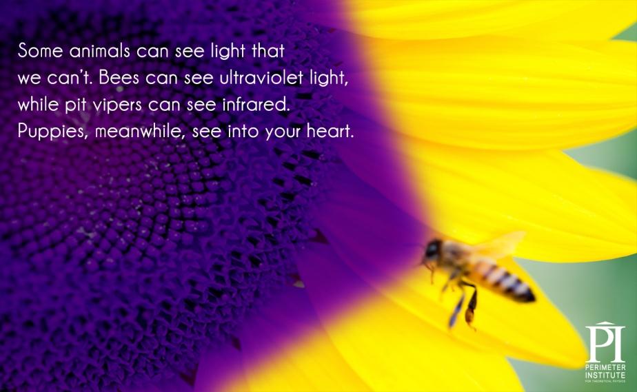 Çeviri: Bazı canlılar bizim göremediğimiz ışığı görebilir. Arılar ultraviyole ışığı görebilirken, çıngıraklı yılanlar kızılötesi ışığı görebilirler. Yavru köpekler, bu arada, sizin kalbinizi görebilir.